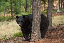 20120706_194329_da-bear-copy