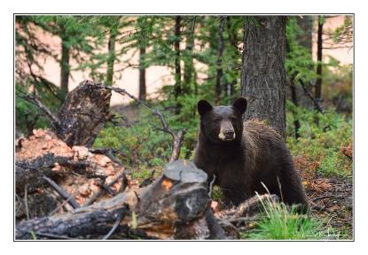 momma-bear